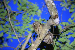 Afrykańska drewniana sowa Zdjęcie Royalty Free