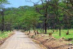 afrykańska droga Zdjęcia Stock