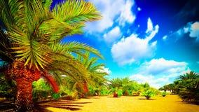 Afrykańska oaza Fotografia Royalty Free