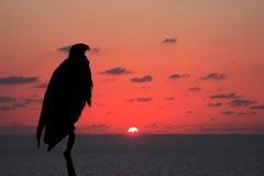 Afrykańska ryba - Eagle Obrazy Royalty Free