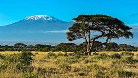 Afrykańska sawanna w Kenja Fotografia Stock