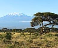 Afrykańska sawanna w Kenja Obrazy Royalty Free