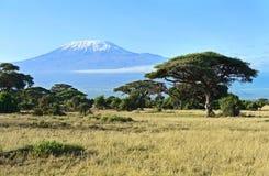 Afrykańska sawanna w Kenja Fotografia Royalty Free