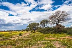 Afrykańska sawanna w kwiacie Zdjęcia Royalty Free