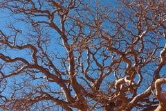 afrykański baobab Zdjęcia Stock