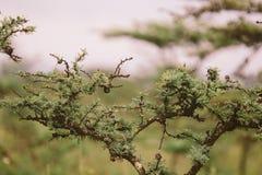 Afrykański Bush Zdjęcia Royalty Free