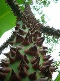 Afrykański drewno, palma Zdjęcie Royalty Free