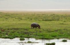afrykański hipopotama park narodowy Obraz Stock