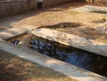 Afrykański krokodyl Zdjęcia Stock
