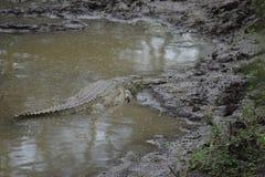 Afrykański krokodyl Zdjęcie Royalty Free
