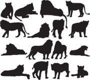 Afrykański lew i azjata lew sylwetki kontur Obrazy Royalty Free
