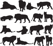 Afrykański lew i azjata lew sylwetki kontur Fotografia Royalty Free