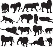 Afrykański lew i azjata lew sylwetki kontur Zdjęcie Royalty Free