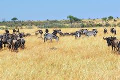afrykański przyrody Zdjęcie Royalty Free
