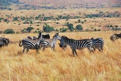 afrykański przyrody Obrazy Stock