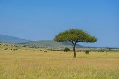 Afrykański sawanna krajobraz, Masai Mara, Kenja, Afryka Obraz Stock