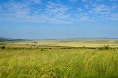 Afrykański sawanna krajobraz, Masai Mara, Kenja, Afryka Fotografia Stock