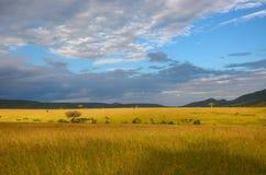 Afrykański sawanna krajobraz, Masai Mara, Kenja, Afryka Fotografia Royalty Free