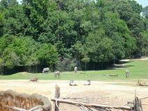 Afrykański wildlfe przy zoo Fotografia Royalty Free