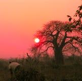 Afrykański zmierzch Zdjęcie Royalty Free