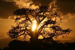Afrykański zmierzch. Tanzania, Afryka Obraz Royalty Free