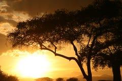 Afrykański zmierzch. Tanzania, Afryka Zdjęcie Stock