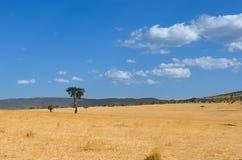 Afrykańskiego sawanna krajobrazu, Masai Mara park, Kenja, Afryka Zdjęcia Stock