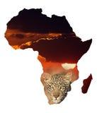 Afryka tło Obraz Stock