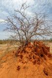 Afryka termitów wzgórze Zdjęcie Royalty Free
