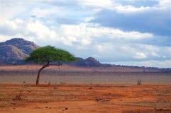 Afryka typowy krajobraz Zdjęcie Royalty Free
