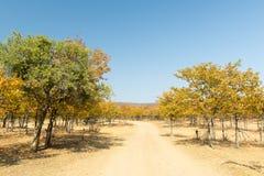 Afryka w jesieni Obrazy Royalty Free