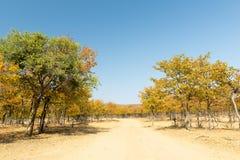 Afryka w jesieni Obrazy Stock