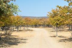 Afryka w jesieni Zdjęcie Royalty Free
