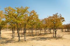 Afryka w jesieni Zdjęcia Stock
