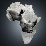 Afryka z swój zagrażającą nosorożec Zdjęcie Royalty Free
