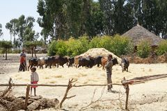 Afryka zbierać Zdjęcia Royalty Free