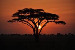 Afryka zmierzch Fotografia Stock