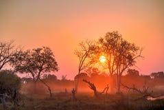 Afryka zmierzch Zdjęcia Stock