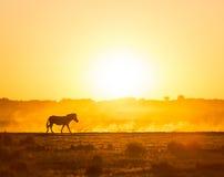 Afryka zmierzchu krajobraz Obrazy Royalty Free