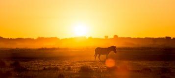 Afryka zmierzchu krajobraz Zdjęcia Royalty Free