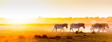 Afryka zmierzchu krajobraz Zdjęcie Stock