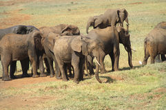 Afryka, zoologia Zdjęcia Stock