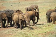 Afryka, zoologia Fotografia Stock