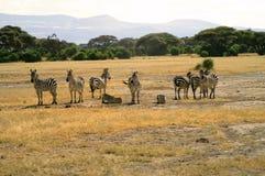 Afryka, zoologia, zebra Obrazy Royalty Free