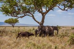 Afrykanów krajobrazowi słonie ochraniają przeciw  Zdjęcie Royalty Free