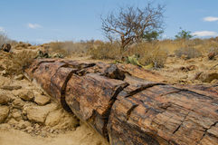 Afrykanów krajobrazy - Damaraland Namibia Obraz Royalty Free