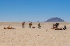 Afrykanów krajobrazy - Namib pustynia Namibia Zdjęcia Royalty Free