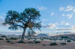 Afrykanów krajobrazy - Namib pustynia Namibia Zdjęcia Stock