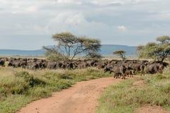 Afrykanów krajobrazy - Serengeti park narodowy Tanzania Obrazy Stock