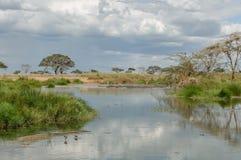 Afrykanów krajobrazy - Serengeti park narodowy Tanzania Zdjęcia Stock
